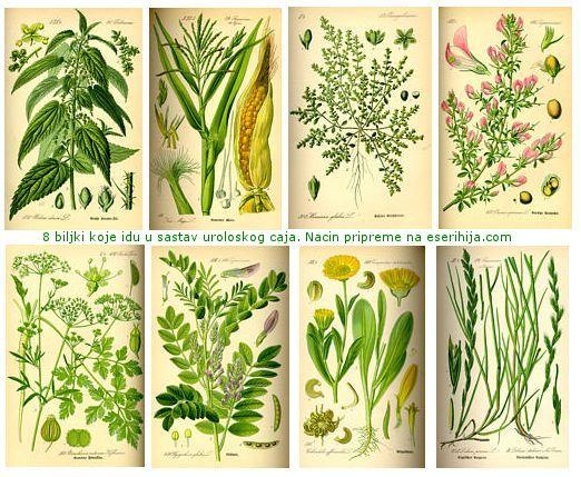 Biljke uroloskog caja